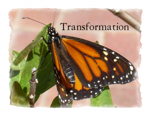 Butterfly Transformation Message
